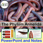 Phylum Annelida (Earthworm) Powerpoint Presentation