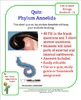 Phylum Annelida (Earthworm) Quiz or Homework
