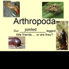 Phylum Arthropoda Powerpoint (Insects. Arachnids, and Others)