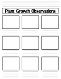 Plant Growth Observation Worksheet