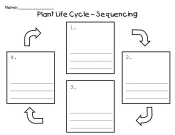 Plant Life Cycle - Sequence