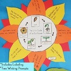 Plant Unit Activity: The Life Cycle of a Sunflower Science Craft