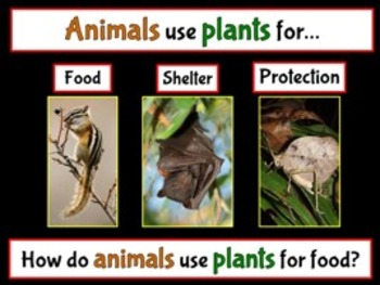 Plants, Animals and the Environment PowerPoint