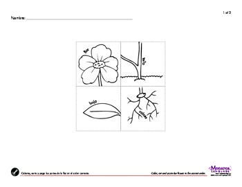 Plants & Flowers Spanish Lesson Complete Set - Plantas y Flores