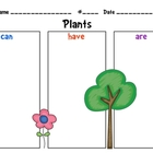 Plants Graphic Organizer