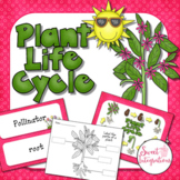 Plants Life Cycle: PowerPoint and Activities