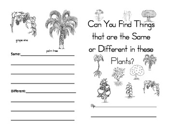 Plants--What is the Same and Different--Comparing