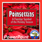Poinsettias - Symbol of Christmas PowerPoint