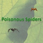 Poisonous Spiders PowerPoint