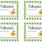 Pollination Review Study Guide