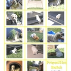 Preposition Puppy Labrador Match-up - 2 pages