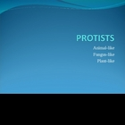 Protist Powerpoint Presentation