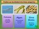 Protists (Algae and Protozoa) PowerPoint and Notes