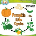 Pumpkin Life Cycle Clipart Set — Comes In Color and Black