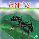 Ants [Interactive eBook]
