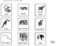 Rainforest Animals of the World  (nonfiction minibook)