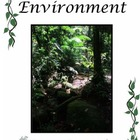 Rainforest Environment