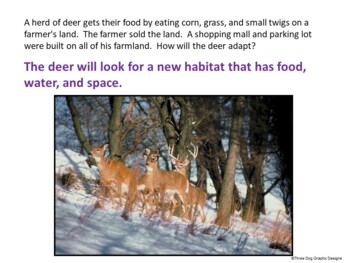 Real-Life Animal Adaptations PowerPoint + Printable Worksheet