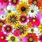Realistic Flower Backgrounds for Commercial Use
