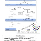 Regulation of Gene Expression Notes Page w/ Numerous Visua
