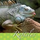 Reptile Language Arts Centers for Pre-K, Kindergarten, and