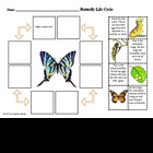 Science: Butterfly Life Cycle