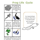 Science: Frog Life Cycle