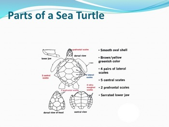 Sea Reptiles - Marine Life Vol. 5 - Slideshow Powerpoint P