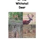 Seasons of the Whitetail Deer
