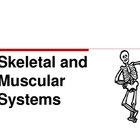 Skeletal and Muscular Systems Powerpoint