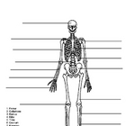 Skeleton Quiz Test. Name the bones of the skeletal system.