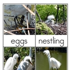 Snowy Egret Research Pack - Nomenclature Science Vocabulary