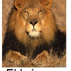 Spanish: Animal Flashcards
