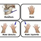 Spanish Flashcards body parts  with photos  .