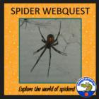 Spider Webquest Assignment