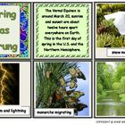 Spring Photos Flashcard Set