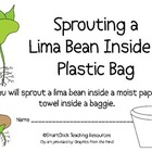 Sprouting a Lima Bean Plant in a Baggie Lab Packet