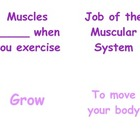 Teaching Muscles in P.E.: Kindergarten & First Grade Muscl