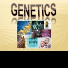 The All-Inclusive Genetics PowerPoint for High School Biology