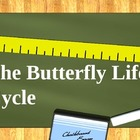 The Butterfly Life Cycle PowerPoint
