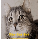 The Cat Sat Vocabulary Quiz