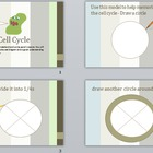The Cell Cycle - Fun and Interactive Step by Step instruction