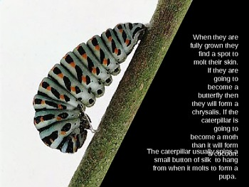 The Life Cycle of a Butterfly and Moth