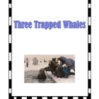 Three Trapped Whales