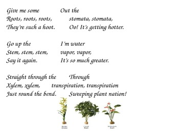 Transpiration and Photosynthesis Activities