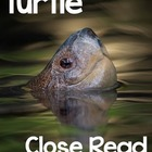 Turtle Close Read