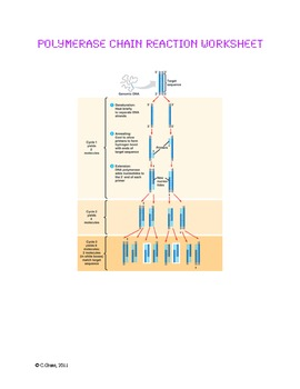 Understanding Polymerase Chain Reaction
