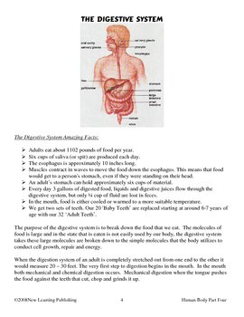 Understanding The Human Body: Digestive and Excretory Systems