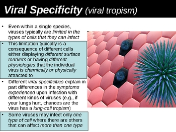 Viral Specificity and Human Lines of Defense Power Point P