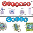Viruses and Cells (Compare &amp; Contrast) TEK B.4C